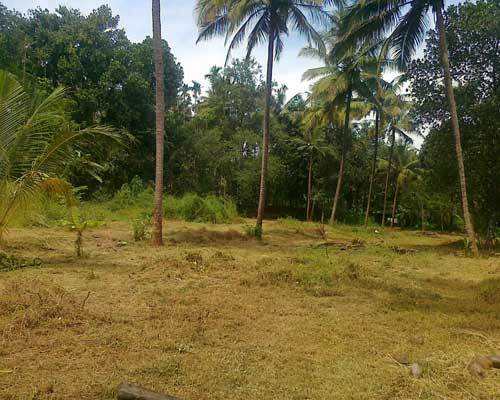 30 cents land for sale at ponganamkad thrissur kerala for Land for sale in kerala
