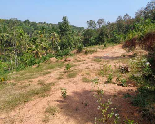 60 cents land for sale at mangalapuram trivandrum kerala for Land for sale in kerala