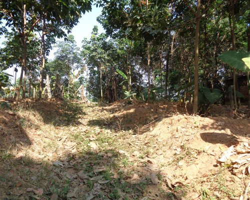 1 acre land for sale at panayamcode near kattakada for Land for sale in kerala