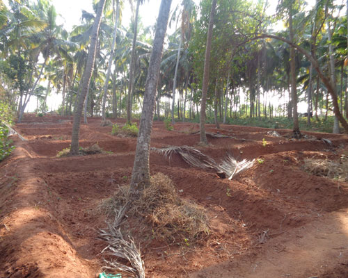 Above 1 acres land for sale at chowara near vizhinjam for Land for sale in kerala
