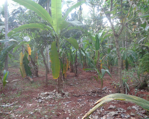 20 cents residential land for sale at kanjiramkulam for Land for sale in kerala
