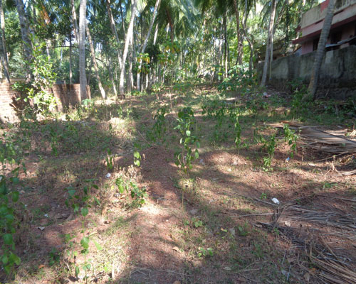 24 cents land for sale at kovalam trivandrum kerala for Land for sale in kerala