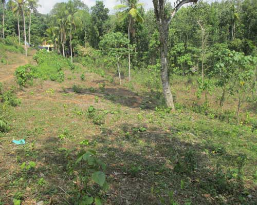 1 acre land for sale at thiruvalla pathanamthitta kerala for Land for sale in kerala