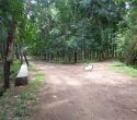Above 2 Acres of Land for Sale at Aryanad Trivandrum Kerala123