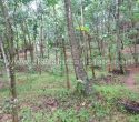 75 Cents Land for Sale at Kattakada Kallikkad Trivandrum Kerala11