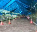 Poultry Farm for Sale near Kattakada Trivandrum Kerala11