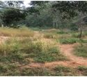 37-Cents-Land-Sale-at-Peyad-Adjacent-to-Skyline-park-Villas-Trivandrum-Peyad-Real-Estate-Properties-Kerala-Land